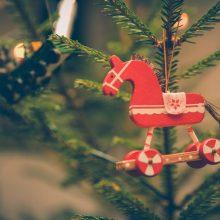 Jakie gatunki iglaków nadają się na świąteczne drzewko?