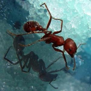 Jak się pozbyć mrówek?
